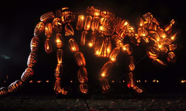 How cool is this!: Triceratops made out of jack-o-lanterns!