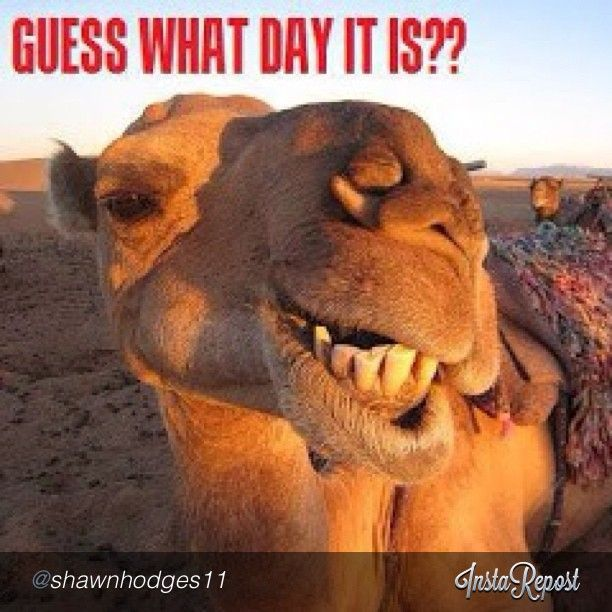 Happy Hump (Wednesday) from BRL Test!