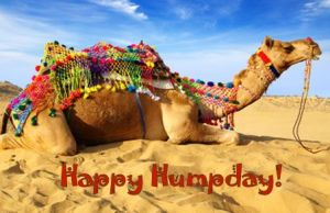 Happy Humpday!